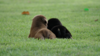 Filhote de cachorro bonito bebê brincando no parque verde