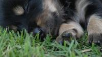 Cute puppy sleeping on a grass field in the park