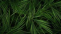 Boucle de fond de feuilles de palmiers d'été