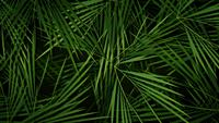 Summer Palm Trees Leaves Background Loop