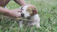 Homme caressant la tête du chien avec amour.