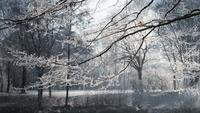 Fond d'animation de paysages d'hiver