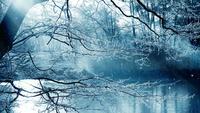 Fondo de paisajes de invierno y estrellas fugaces