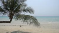 Een Kokospalm En De Zee
