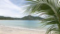 Kokosnötträd på stranden
