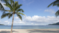 Noix de coco sur une plage tropicale
