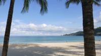 Arbres tropicaux de plage et de noix de coco