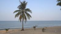 Ein Kokosnussbaum Und Das Meer