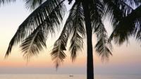Kokosnussbaum Am Strand