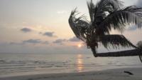 Palmträd vid solnedgångtid