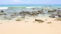 Tropisch strand oceaan