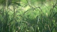 Grünes Gras auf einer Wiese