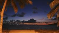 Palmiers de plage la nuit