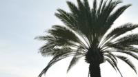 palmträd och himlen