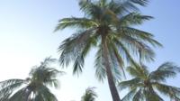 Palme und der Himmel