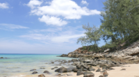 Palme Auf Dem Strand