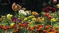 Färgglada blommor blommar i en sommarträdgård