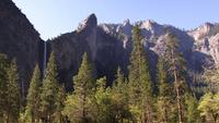 Une forêt de pins nichée dans un canyon de Yosemite
