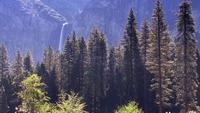 Uma floresta de pinheiros situada em um desfiladeiro de Yosemite