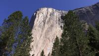 Pine Trees Frame El Capitan Rock Face in Yosemite Valley