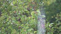 Gouttes de pluie avec un fond de végétation verte