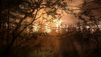 Evening Light Forest Background