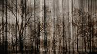 Mörk mystisk träbakgrund