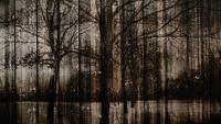 Fond en bois mystique sombre