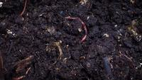 Group Of Earthworms B