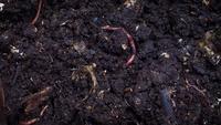 Groep aardwormen B