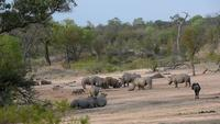 Rhinos, warthogs, impalas and gnus drinking together