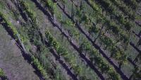 Vista aérea de un viñedo en otoño