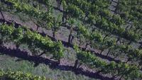 Vista aérea de um vinhedo no outono