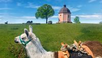 Llama on tour in Germany