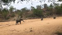 Manada de elefantes marchando em direção ao poço de água