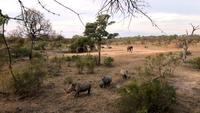 Noshörningar och elefanter vid solnedgången