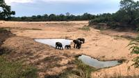 Elephants herd with cute babies