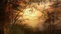 Paisaje del bosque al atardecer