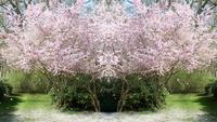 Jardin de printemps fantastique