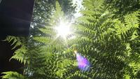 Sunlight In Green Forest During Summertime