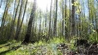 Slider Shot em uma floresta ensolarada