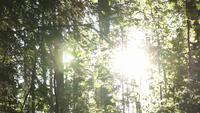 Slider Shot dans une forêt ensoleillée