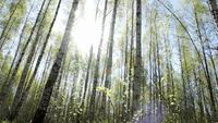 Skjutreglaget Skjutit i en solig skog