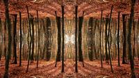 Simetria de outono de fantasia