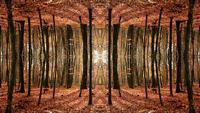 Fantasie Herfst Symmetrie