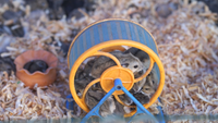 Little Mice In A Spinning Wheel