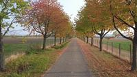 Alley in autumn park with colorful foliage