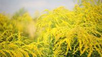 Flores silvestres amarelas no parque