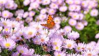 Mariposa en flores de verano de cerca