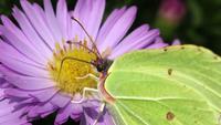 De vlinder op de Zomerbloemen sluit omhoog